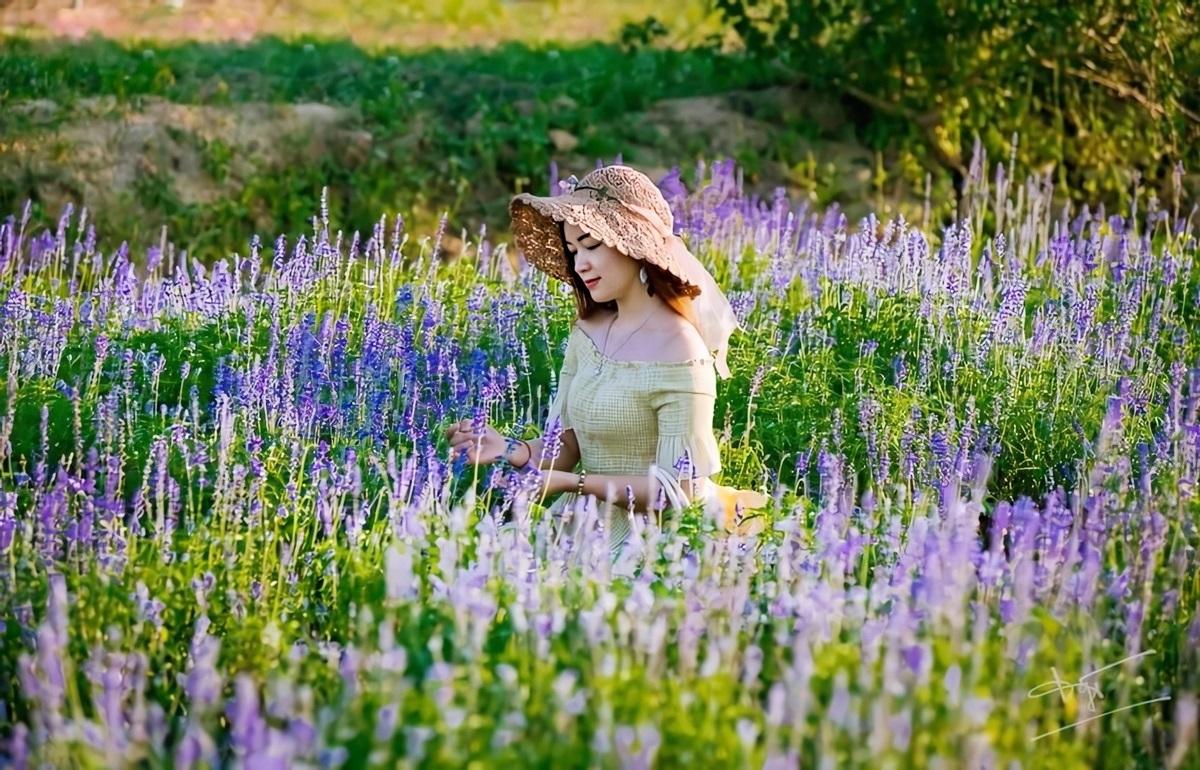 Thảm hoa Nữ hoàng xanh - thuộc họ lavender - được nhiều người trẻ ưa chuộng. Hoa tím phủ khắp và cao gần nửa người, tươi tốt nhất vào cuối tháng 4 và đầu tháng 5. Hàng nghìn bức ảnh đẹp như tranh được du khách lẫn người dân bản địa chia sẻ trên mạng xã hội.