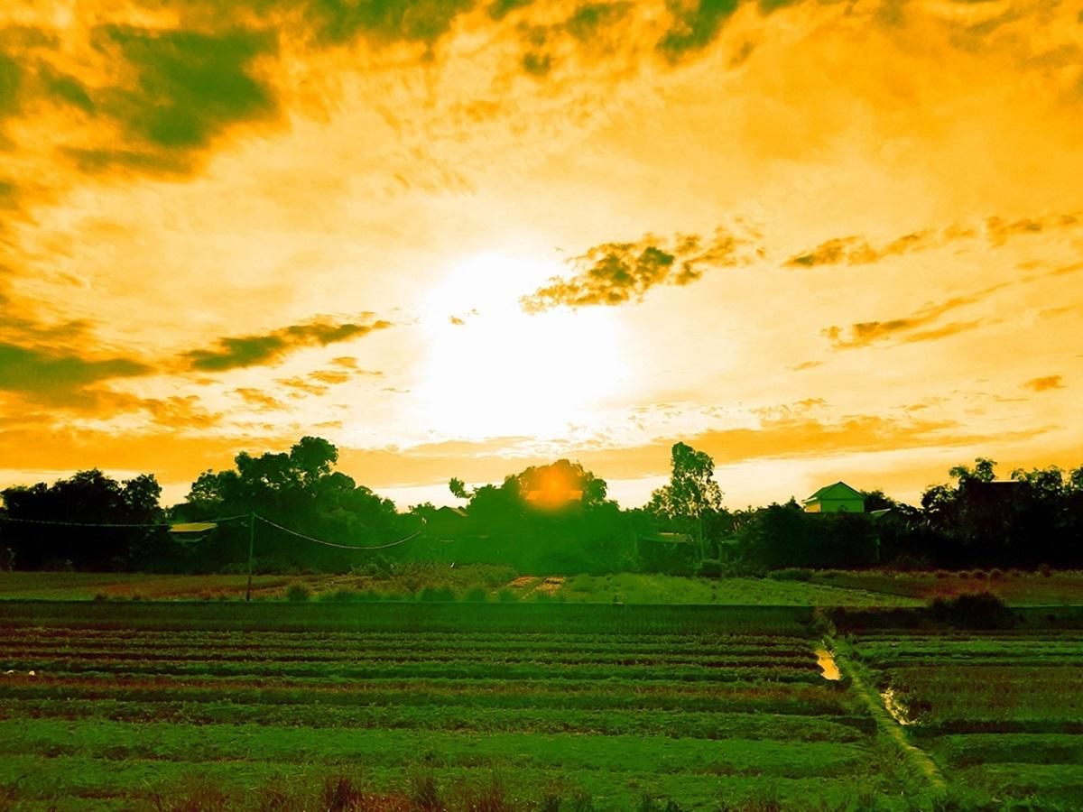 Nhiều người trẻ tìm đến nông trại để chụp lại khoảnh khắc bình minh, mặt trời ló dạng sau những luống hoa và thảm xanh.