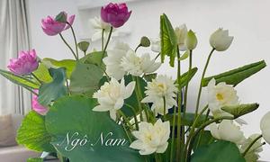'Đầm sen' trong nhà của nam doanh nhân Hà Nội