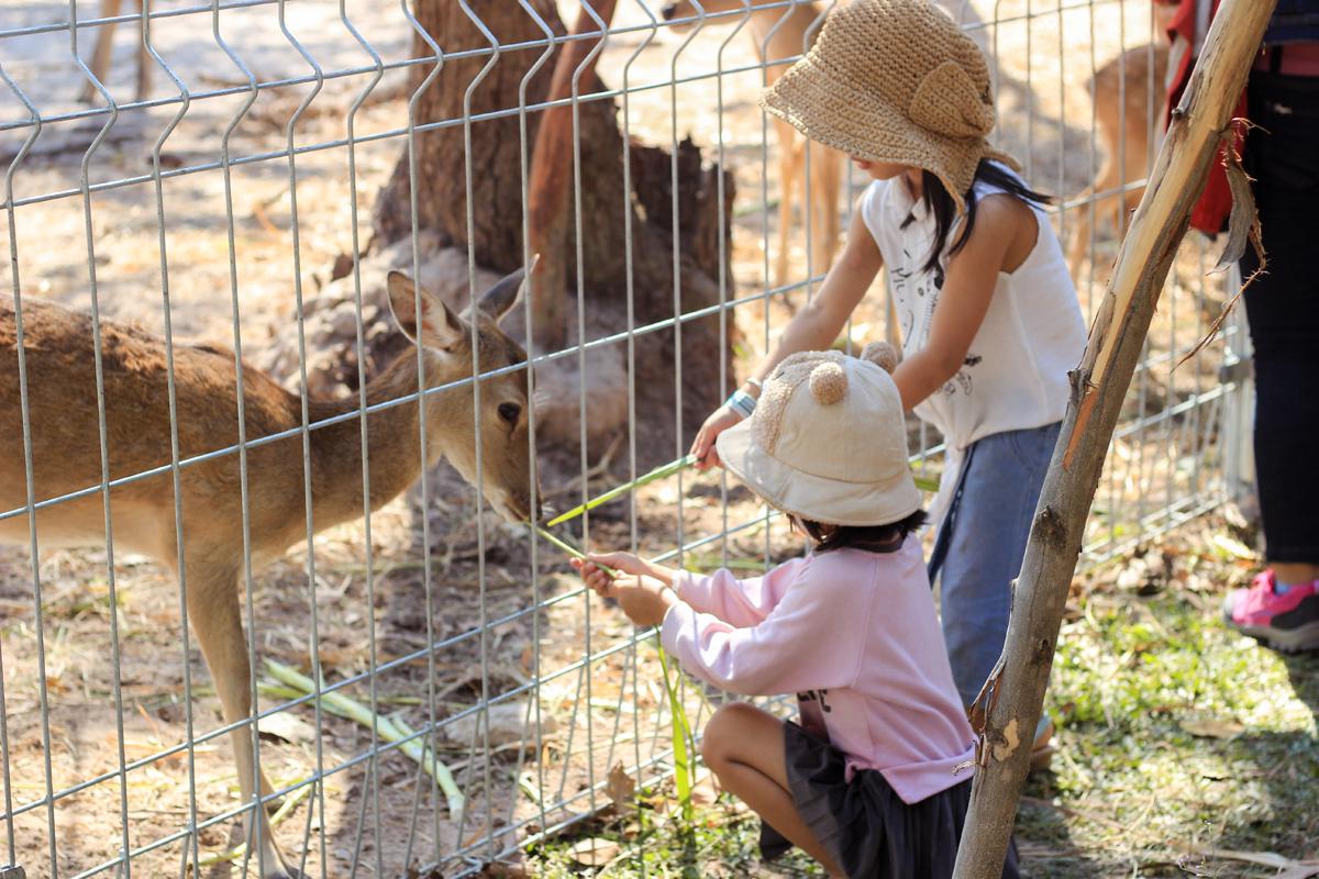 Minera Hot Spring Binh Chau thiết kế những khu vực riêng dành cho các du khách nhí để khám phá về nước cùng rừng cây với những con thú đáng yêu và các hoạt động tăng cường thể chất toàn diện.