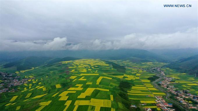 Đồng hoa cải lớn bậc nhất Trung Quốc đón khách lác đác - 6