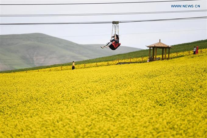 Đồng hoa cải lớn bậc nhất Trung Quốc đón khách lác đác - 8