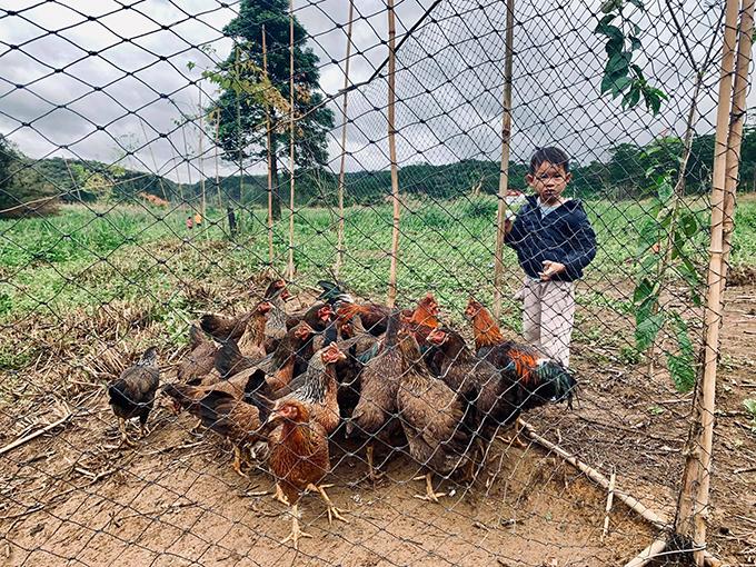Bé Mio vừa tò mò vừa sợ sệt khi nhìn đàn gà hàng chục con dõi theo mình. Giống như các anh chị, Mio cũng thích ở quê hơn thành thị vì thoải mái nô đùa, chạy nhảy.