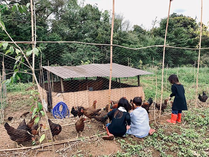 Đàn con của Lý Hải - Minh Hà cùng nhau cho gà ăn thóc. Lũ trẻ ra dáng những nông dân tí hon khi đi ủng nhựa, cùng bố mẹ chăm đàn gà, đào đất, trồng rau.