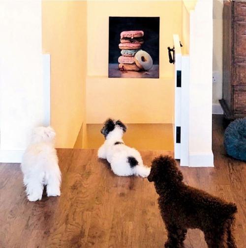 Những chú chó cưng của Huỳnh Trí Hiền với vợ.
