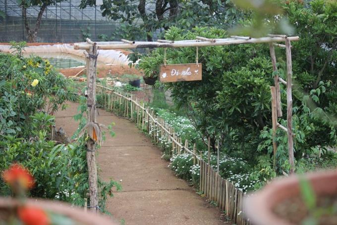 Tiệm trà bánh mộng mơ ở Đà Lạt - 2