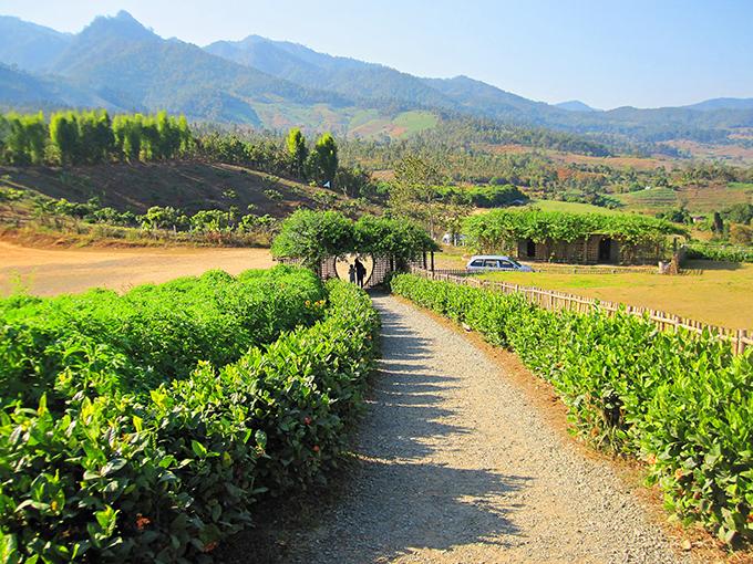 Ngôi làng Santichon xanh mướt cỏ cây.