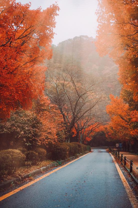 Những con đường được bao bọc bởi lá đỏ và vàng ở hai bên mang đến tầm nhìn tuyệt đẹp. Con đường rợp bóng cây từ trung tâm thông tin đi bộ đường dài đến đền Naejangsan với 108 cây dày đặc là địa điểm check in ngoạn mục.