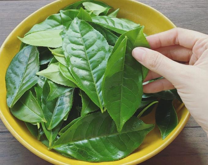 Tóc Tiên hái trà trong vườn, tự hãm uống mỗi ngày