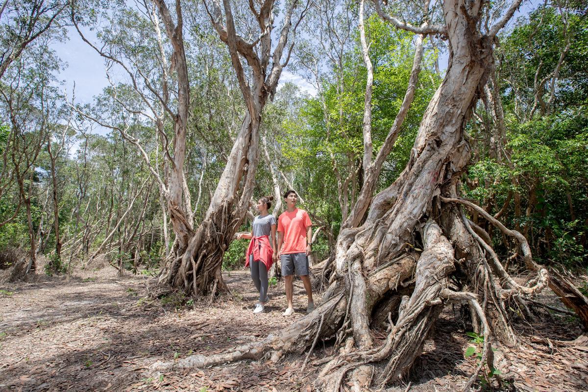 Một góc rừng vào mùa khô, nước cạn để lộ các rễ cây. Nơi đây thường được các cặp đôi chọn làm điểm chụp ảnh cưới.