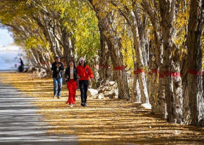 Hồ dương là một trong những cây cổ xưa, hơn 60 triệu năm trước đã có mặt trên trái đất. Là cây thân gỗ, rụng lá, cao 15-30m, cây non và cành non mọc lông mềm dày đặc, lá rất to có lông gai khi cây còn non.