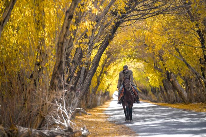 Con đường này nằm tại huyện tự trị Taxkorgan Tajik, Tân Cương trên cao nguyên Pamir, thưa vắng xe cộ qua lại nên gia súc như bò, ngựa của người dân thường lững thững qua lại rất dạn người.