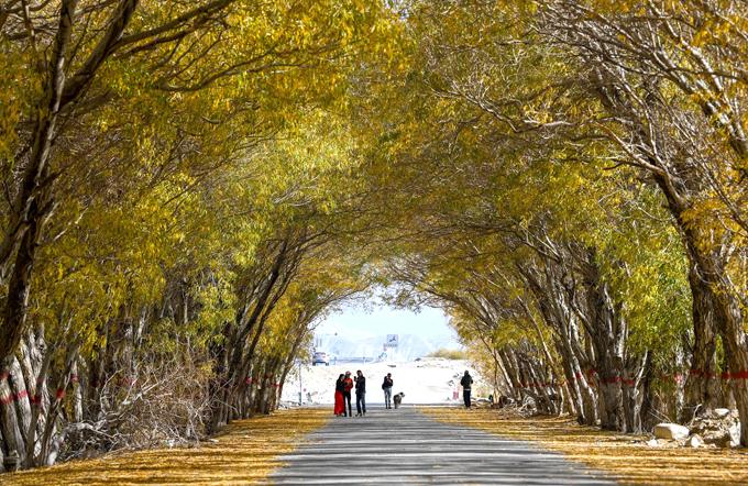 Hồ dương ở Tân Cương được trồng dọc các con đường, chùm bóng, tỏa thành đường hầm độc đáo, thu hút đông du khách tới tham quan, chụp ảnh.