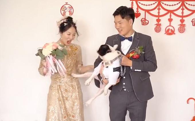 Con chó bull Pháp San Jiu đá cô chủ Cao khi chụp ảnh cưới hôm 26/10 tại thành phố Bạc Châu, tỉnh An Huy, Trung Quốc. Ảnh: Douyin.