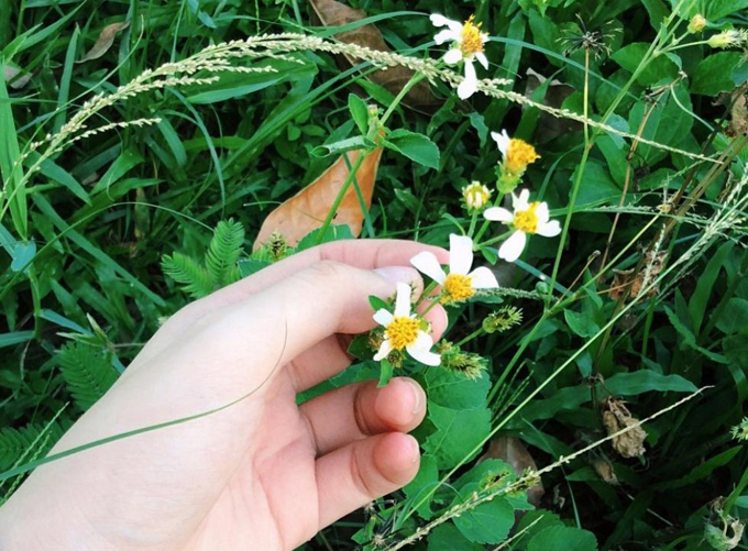 Đặc sản gỏi hoa xuyến chi Yên Bái - 2
